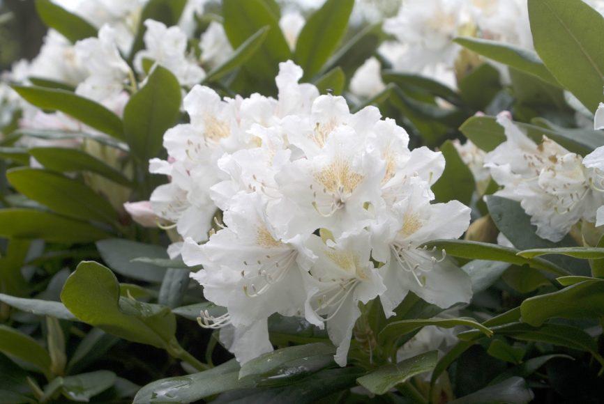 Piękne duże kwiaty bardzo dekoracyjne