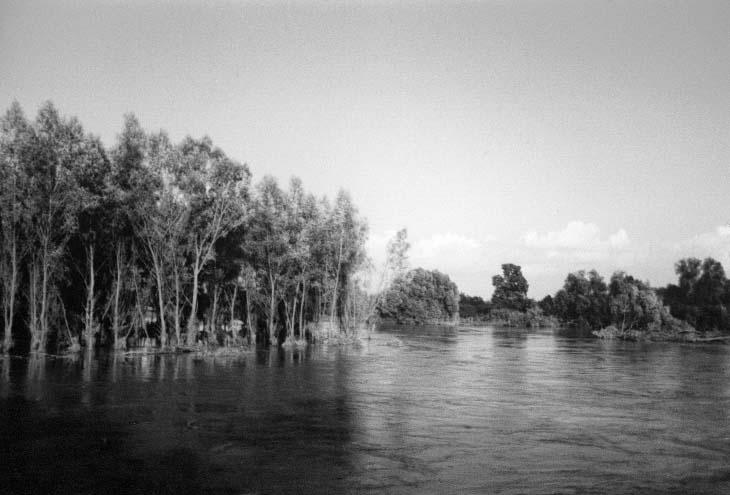 Las zalany Czepielowice - Kolnie
