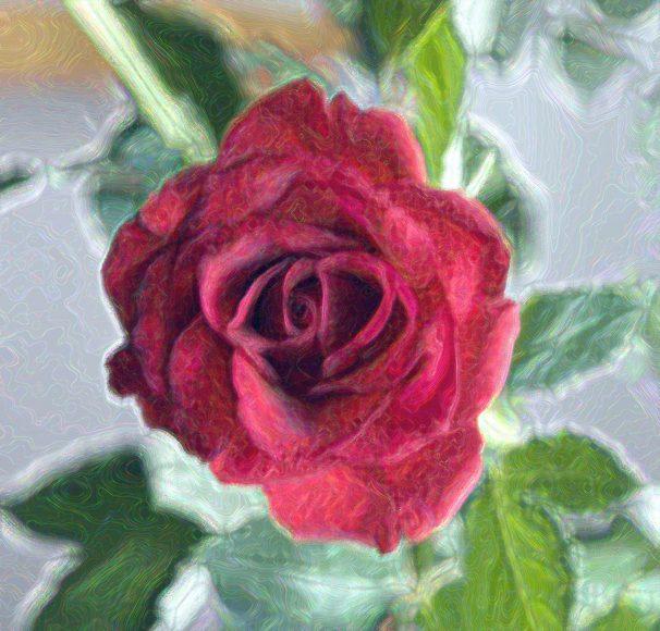 Róża w malarskim ujęciu