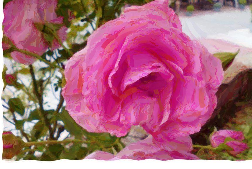 _art_róża różowa marmoreal